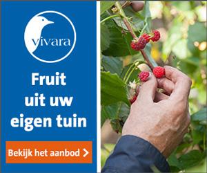 Vivara.nl cashback